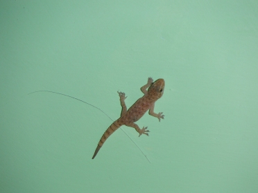 Mr. Lizzy the tiny lizard (or gecko or amphibian of sorts)