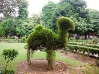 Camel Bush