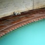 Lotus Temple Pond Dog