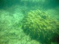 Coral and Fish at Salad Beach
