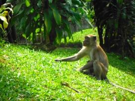 Monkey at KL Bird Park